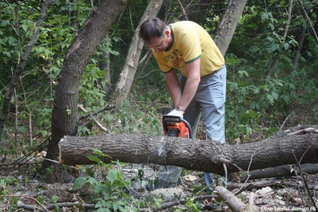 Начато выпиливание деревьев
